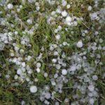 Maltempo: Coldiretti Verona, verifica dei danni a frutta e viti nelle zone colpite